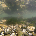 North Foreland rockpools 1