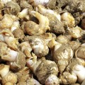 whelks-header