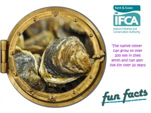 Fact 11 Oyster